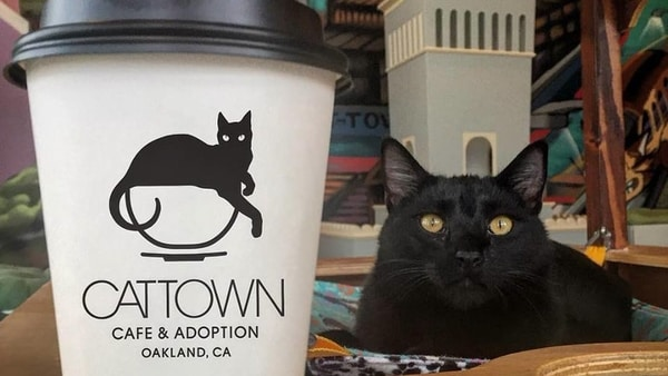 Cat Cafe and Minnesota Food Safety Certifications