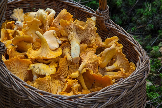 Minnesota Food Manager and Sourcing Wild Mushrooms