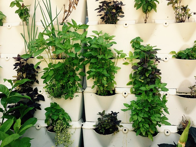 CFPMs and In-House Grown Herbs