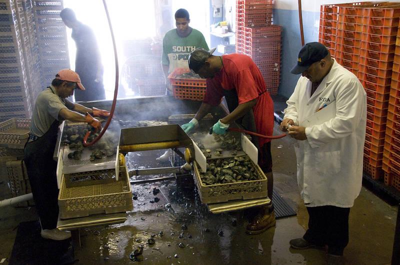 Safely Serving shellfish